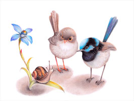 Wrens with Snail Print