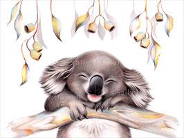 Hanging Koala Close Up