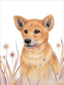 Dingo Pup Print