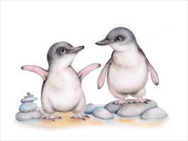Fairy Penguins Print