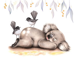Sleepy Koala & Willie Wagtails