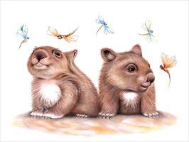 Awake Wombats Print