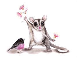 Sugarglider and Scarlet Robin Print