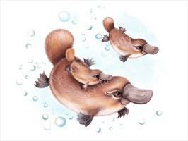 Platypus Family Print