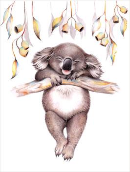 Hanging Koala Print