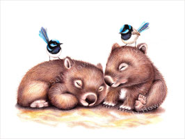 Sleeping Wombats Print