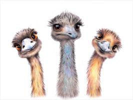 Emus Print