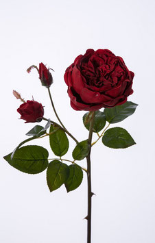 English Rose 56cm