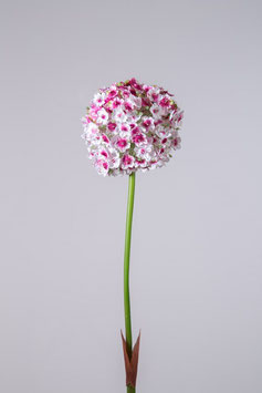 Single Allium 82cm