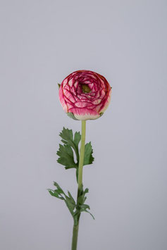 Ranunculus Stem w/3 lvs 50cm