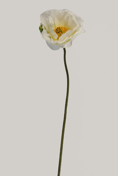 Single Poppy 77cm