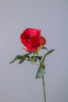 Hybrid Austria Rose Stem w/2 lvs 55cm