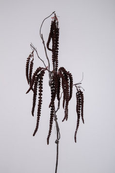 Mini Amaranthus Spray 97cm