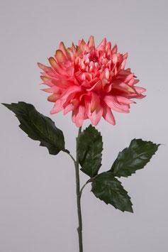 Giant Dahlia Single Stem w/2 set lvs 69cm