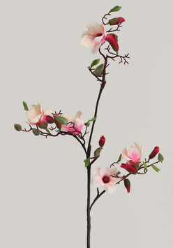 Magnolia L w/5 flrs 8 buds 115cm