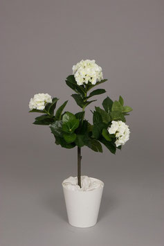 Hydrangea A Tree w/60lvs 108flrs 70cm