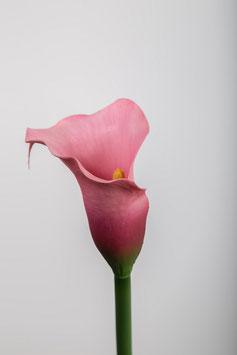 Calla Lily Spray M 76cm