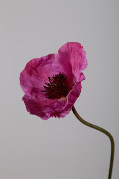 Poppy Spray 68cm