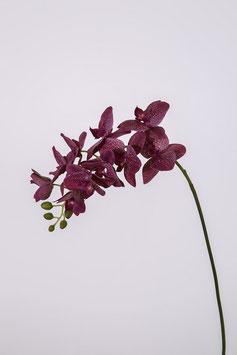 Phalaenopsis w/10 flrs 70cm