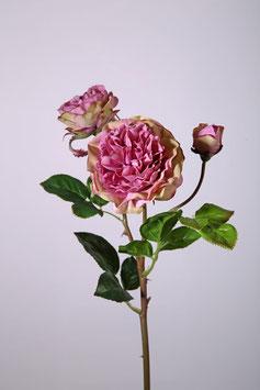 Garden Wild Rose x3 53cm