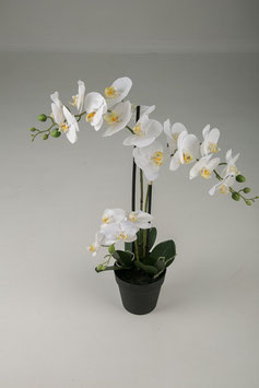 Butterfly Orchid Spray x3 in pot 64cm
