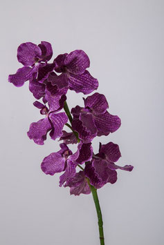Single Vanda Orchid Stem 84cm