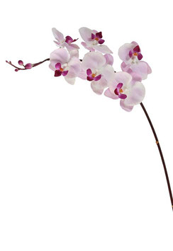 Single Phalaenopsis Spray