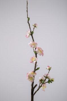 Blossom Wintersweet 68cm