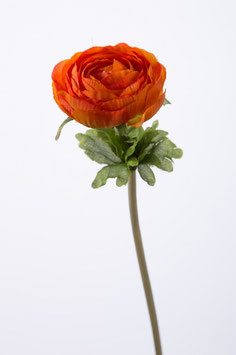 Single Ranunculus 30cm