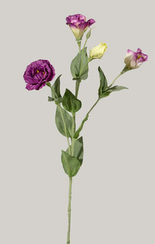 Mini Lisianthus Spray 56cm