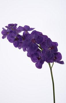 Vanda Orchid x13 flrs 70cm