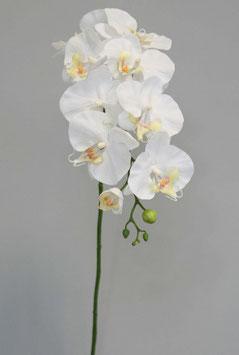 Phalaenopsis Stem 78cm