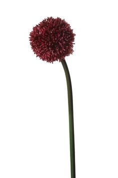 Allium Ligustrum 65cm