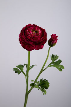 Ranunculus Double 48cm