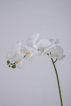 Phalaenopsis Spray 97cm