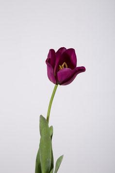 Tulip Stem 62cm