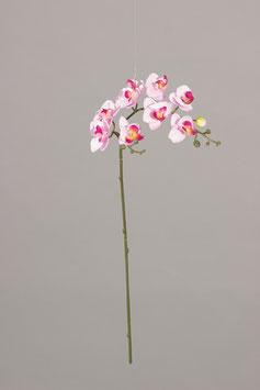 Phalaenopsis x9 fl. 1 Bud