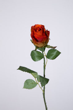 Hybrid Rose Stem w/2 set lvs 55cm