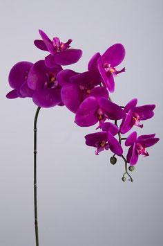 Phalaenopsis Spray w/9 flrs 86cm