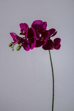 Phalaenopsis Stem 70cm