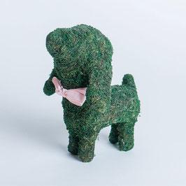 講座No.5:モストピアリー仔犬