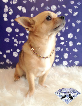 "Jewels4Pets Luxury 585 Gold dog necklace ""Shooting Stars"" with Amethyst gemstones & Zirconia"