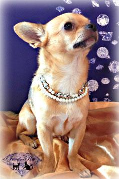 "Jewels4Pets dog necklace ""Vanity"""