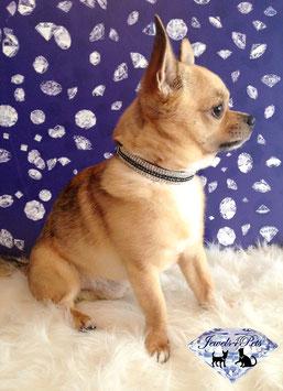 "Jewels4Pets luxury jewelry dog collar ""Skyline"""