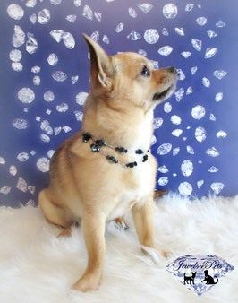 "Jewels4Pets dog necklace ""Wish"""