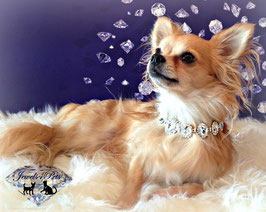"Jewels4Pets dog necklace ""Crystal"""