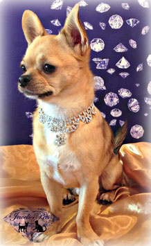"Jewels4Pets dog necklace ""Glamour"""