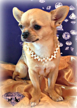 "Jewels4Pets Luxus Hundecollier ""Exclusive"" Echt Süsswasserzuchtperlen"