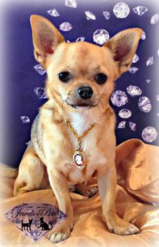 "Jewels4Pets dog necklace ""Beauty"""