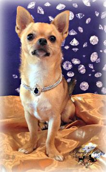 "Jewels4Pets dog necklace ""Royal"""